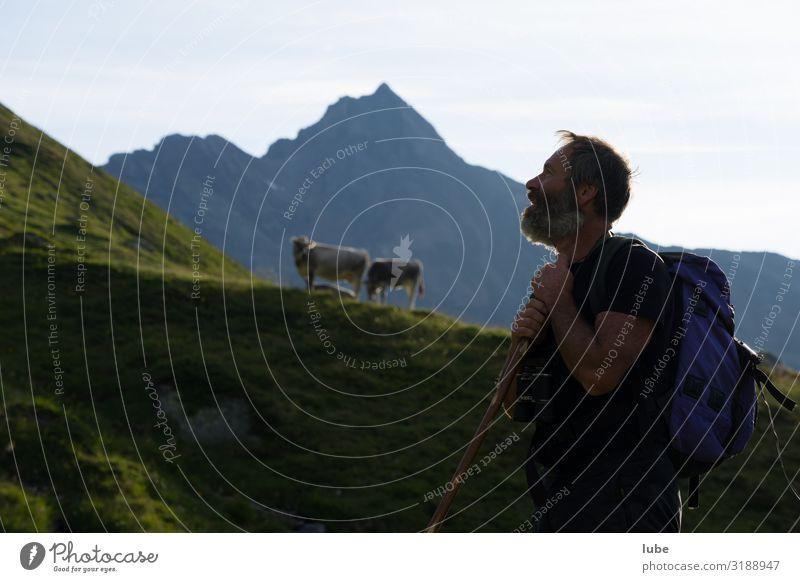 Hirtenblick Landwirtschaft Forstwirtschaft maskulin 1 Mensch 45-60 Jahre Erwachsene Umwelt Natur Landschaft Sommer Klima Hügel Felsen Alpen Berge u. Gebirge