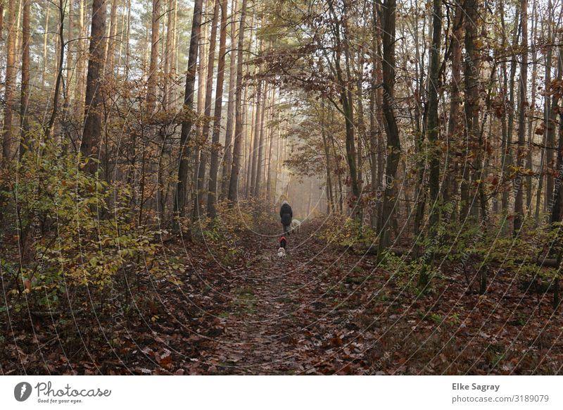 Auch der Herbst hat noch schöne Tage.... feminin Frau Erwachsene 1 Mensch 60 und älter Senior Natur Tier Nebel Baum Sträucher Wald Haustier Hund 3 Erholung