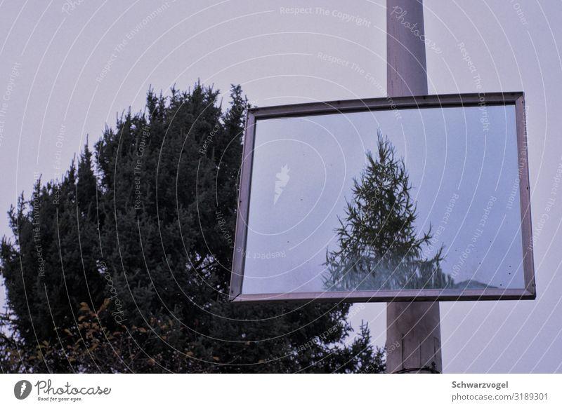 Objects in mirror are closer than they appear Pflanze Baum Spiegel Wachstum Zusammensein oben trist grau grün Stimmung bescheiden zurückhalten Partnerschaft