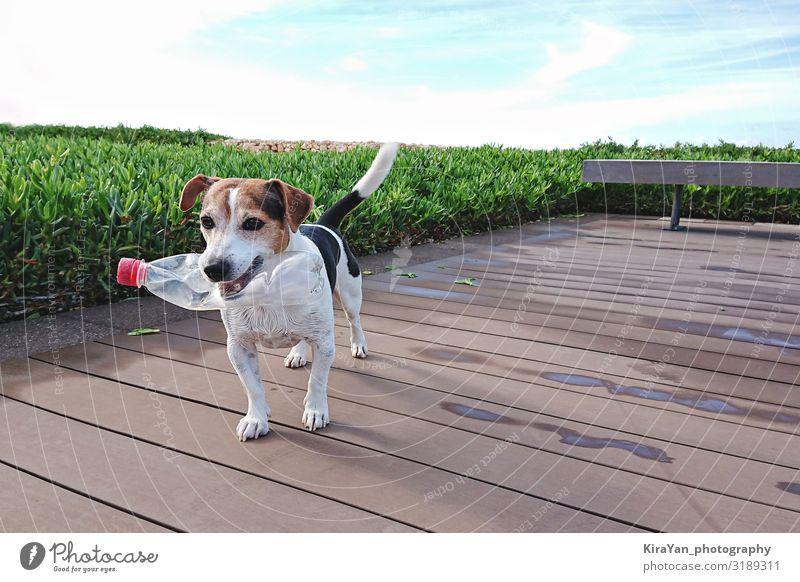 Süßer Hund hält Plastikflasche im Maul Outdoor Umwelt Natur authentisch klein niedlich Kunststoff Kunststoffverpackung 0 Müll Recycling Reinigen klug
