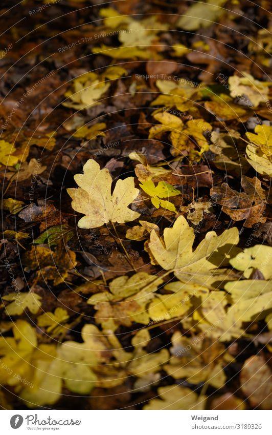 Blatt Herbst gelb Traurigkeit Tod wandern gold liegen Vergänglichkeit Trauer Sorge Mitgefühl