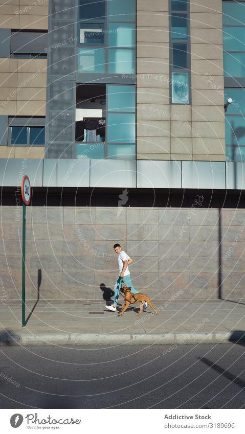 Mann läuft und spielt mit seinem Hund Boxer in einem Park. Aktion Tier niedlich heimisch Freundschaft Freude lustig Gras Typ Glück Lifestyle Natur Außenaufnahme