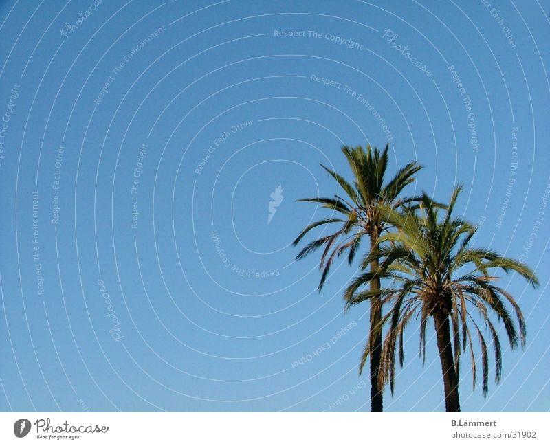 Palmen im Himmel blau schön Sommer Strand Freiheit träumen Europa Rom Paradies