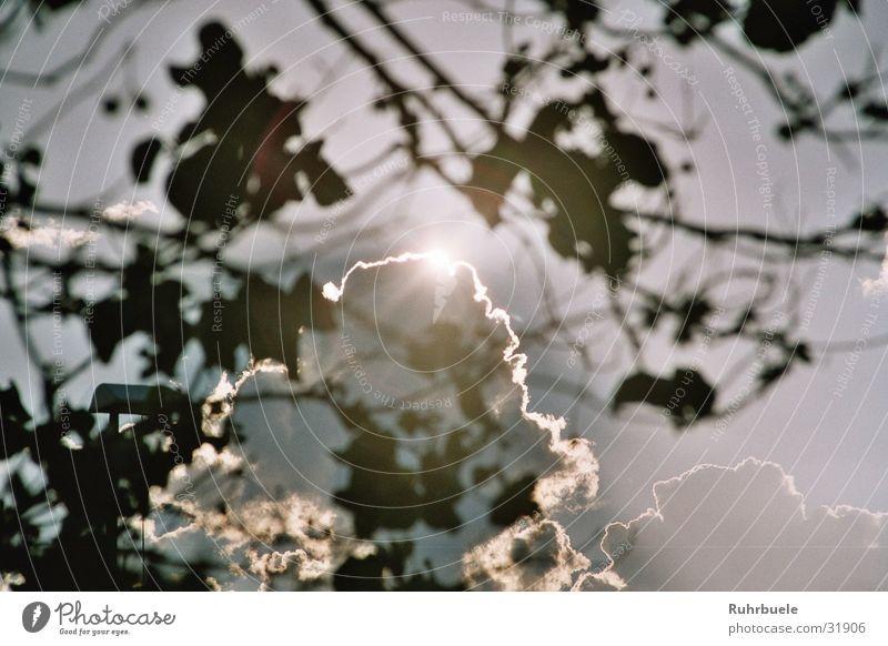 Wolkenverhangen Baum Regenwolken Sonnenuntergang Sonenschein Lichterscheinung Abend