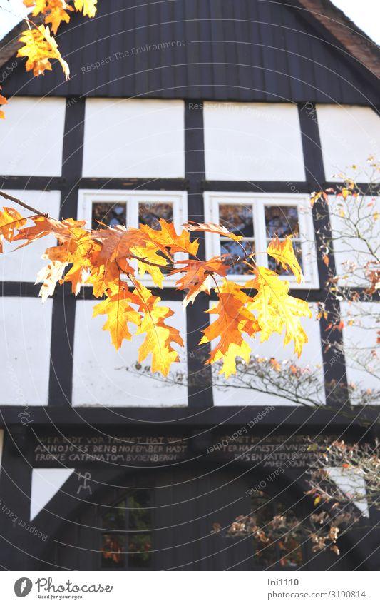Fachwerkgiebel Landschaft Herbst Schönes Wetter Baum Blatt Eichenblatt Park Haus Fachwerkfassade Fassade Fenster Denkmal braun gelb schwarz weiß Fachwerkhaus