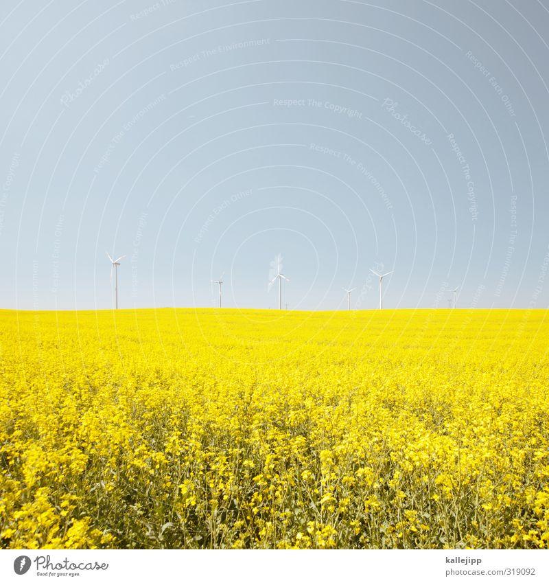 bohemian RAPSody Arbeit & Erwerbstätigkeit Landwirtschaft Forstwirtschaft Energiewirtschaft Umwelt Natur Landschaft Pflanze Tier Nutzpflanze Feld blau gelb