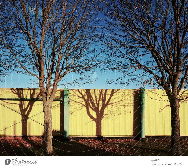 Wandmal Umwelt Natur Pflanze Wolkenloser Himmel Herbst Schönes Wetter Baum Gras Baumschatten Ast Zweige u. Äste Mauer Holz Metall leuchten blau gelb Baumarkt