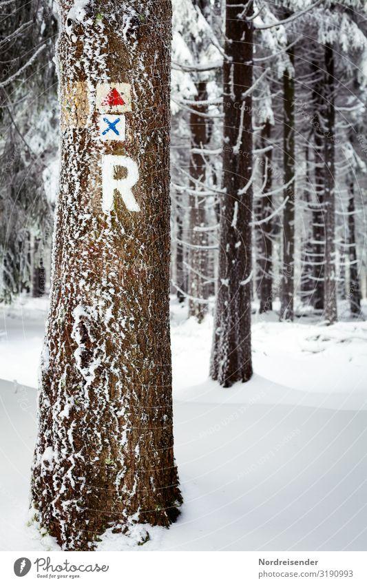 Rennsteig im Winter Ferien & Urlaub & Reisen Ausflug Winterurlaub wandern Landwirtschaft Forstwirtschaft Natur Landschaft Klima Schönes Wetter Eis Frost Schnee