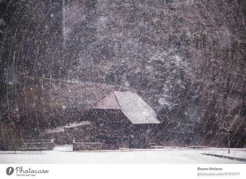 Im Schwarzwald hat's mal wieder geschneit 1 Landwirtschaft Forstwirtschaft Natur Landschaft Winter schlechtes Wetter Eis Frost Schnee Schneefall Wald