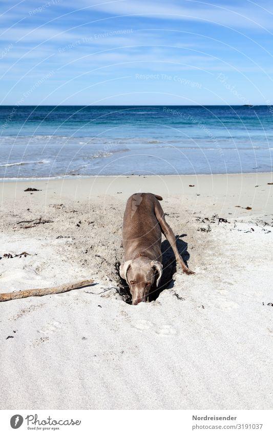 Verloren | .... aber auf der Suche Himmel Ferien & Urlaub & Reisen Natur Hund Sommer Wasser Landschaft Meer Wolken Tier Strand Spielen Freiheit Sand