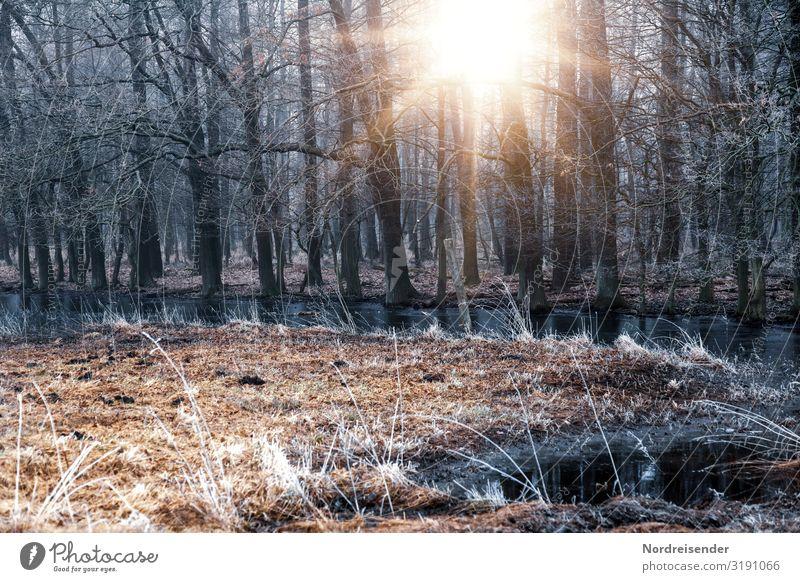 Novemberwetter ruhig Ausflug Natur Landschaft Sonne Herbst Winter Wetter Schönes Wetter Eis Frost Blume Gras Wiese Wald Moor Sumpf Bach verblüht kalt Stimmung