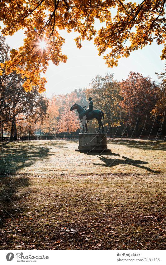Im Tiergarten: Und sie reitet in den Sonnenaufgang Ferien & Urlaub & Reisen Tourismus Ausflug Ferne Freiheit Sightseeing Städtereise Umwelt Herbst