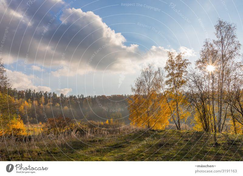 Herbstlandschaft Umwelt Natur Landschaft Pflanze Himmel Wolken Baum Gras Wiese Wald blau gelb gold grün orange herbstlich Sonnenstern Nebel Nebelschleier