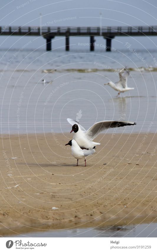 Frühlingsgefühle Natur blau Wasser weiß Landschaft Tier Strand schwarz Umwelt natürlich Bewegung außergewöhnlich Vogel braun Sand