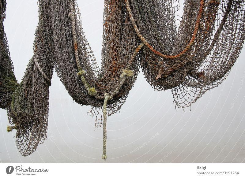 altes Fischernetz mit Tauen hängt an einer weißen Wand Mauer Dekoration & Verzierung Netz festhalten hängen außergewöhnlich historisch einzigartig maritim