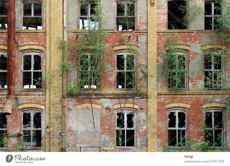 Fassade eines alten historischen Backsteingebäudes mit zerstörten Fenstern und grünem Bewuchs Umwelt Pflanze Baum Chemnitz Gebäude Mauer Wand authentisch