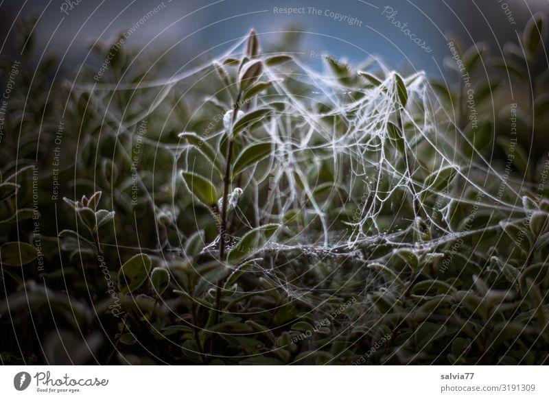 spider art Natur Pflanze Wasser Blatt Herbst Umwelt Garten außergewöhnlich Park Sträucher Wassertropfen Frost Tau Kunstwerk Raureif Spinngewebe