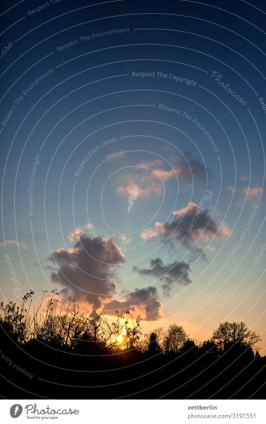Sonnenuntergang über Siemensstadt Abenddämmerung Baum Dämmerung Erholung Feierabend Ferien & Urlaub & Reisen Garten Herbst Schrebergarten Kleingartenkolonie