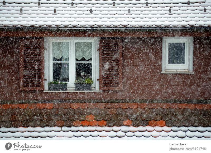 Es schneit, Blick zum Nachbarhaus Häusliches Leben Gardine Blumenkasten Herbst Winter Schnee Schneefall Haus Fassade Fenster Dach kalt Stimmung Vorfreude Idylle