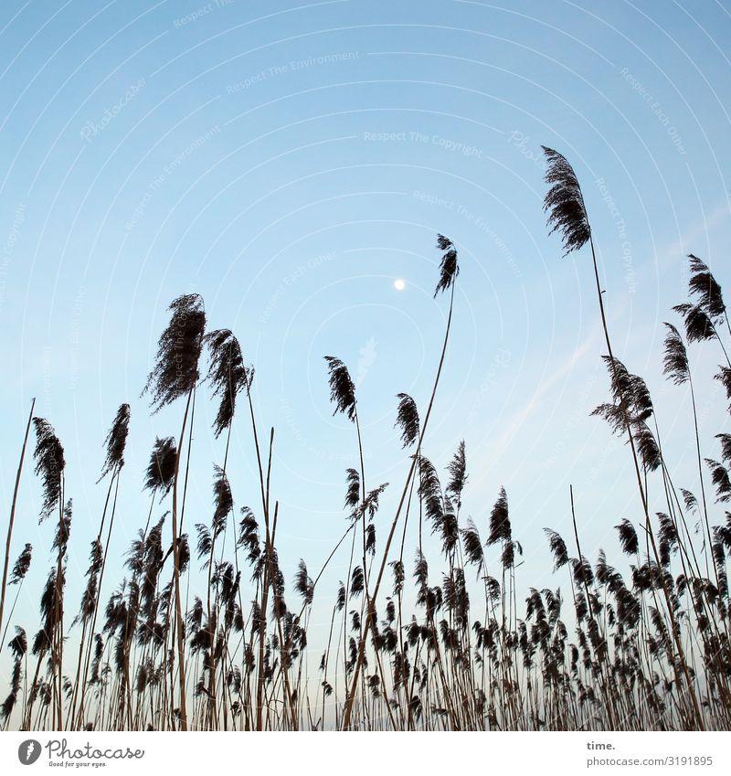 Mondphase himmel gras gräser urlaub entdeckung perspektive mond wolken sumpf zusammen gemeinsam gemeinschaft stehen wachsen natur landschaft schönes wetter