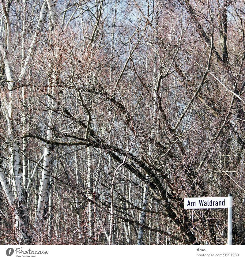 Orientierungshilfe | Geschriebenes Natur Baum Wald Frühling Wege & Pfade Kommunizieren Ordnung Kreativität Schönes Wetter Idee Hilfsbereitschaft entdecken