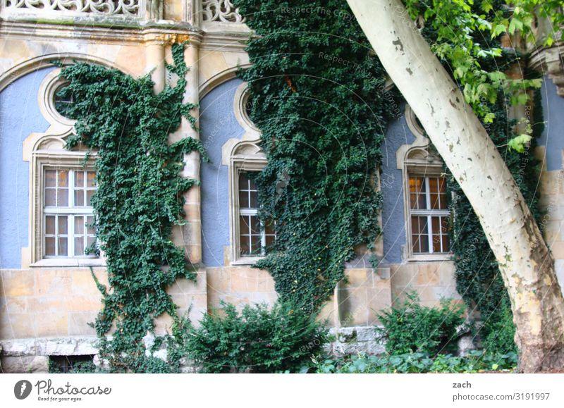 verwachsen Pflanze Baum Sträucher Efeu Blatt Grünpflanze Budapest Stadt Hauptstadt Palast Burg oder Schloss Ruine Fassade Fenster Wachstum alt historisch blau
