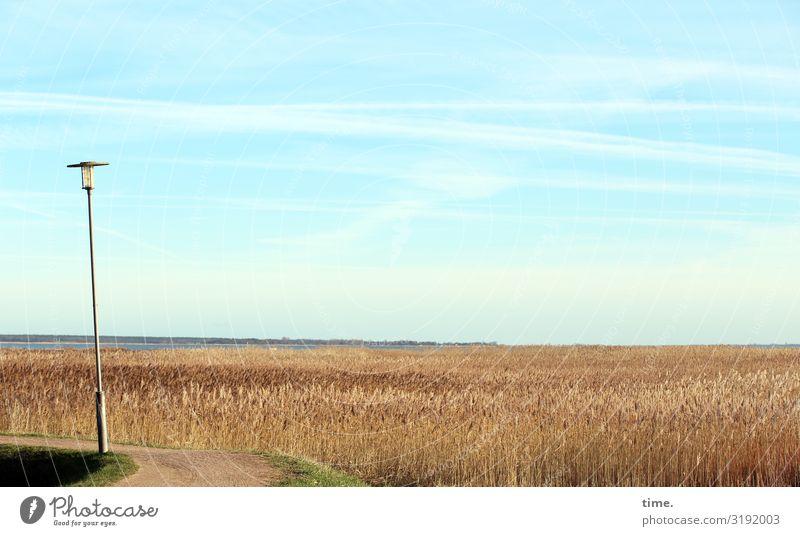 Heimatfilm (III) Lebensmittel Getreide Energiewirtschaft Laterne Straßenbeleuchtung Umwelt Natur Landschaft Himmel Horizont Schönes Wetter Pflanze Nutzpflanze