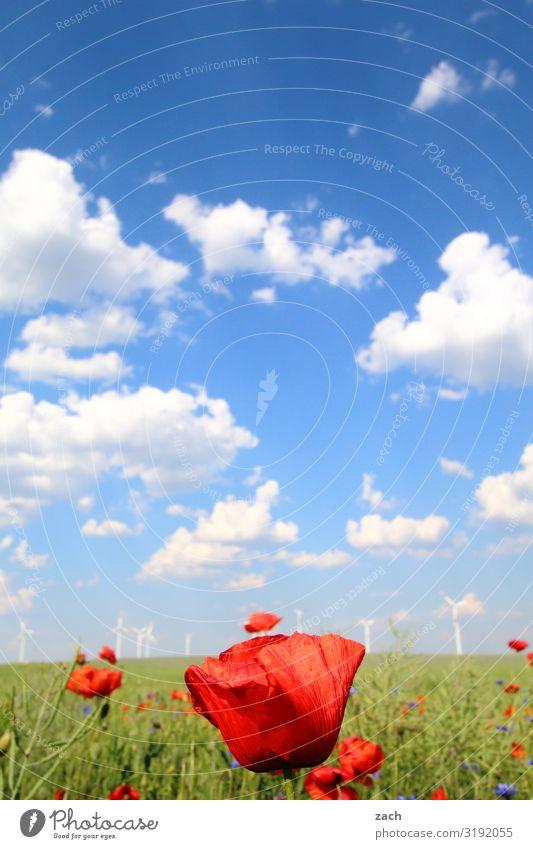 22. Dezember - Frühlingsanfang Landwirtschaft Forstwirtschaft Energiewirtschaft Erneuerbare Energie Windkraftanlage Energiekrise Landschaft Himmel Wolken