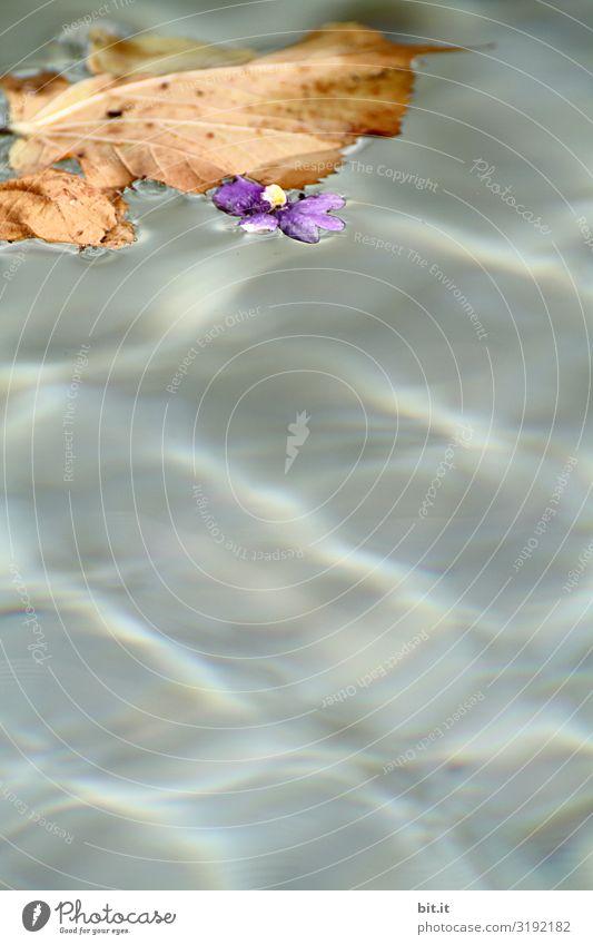 Lieblicher Herbst Natur Wasser Blatt Umwelt Blüte natürlich nass Herbstlaub herbstlich Herbstfärbung Herbstbeginn