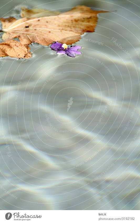 Lieblicher Herbst Umwelt Natur Wasser Blatt Blüte nass natürlich Herbstlaub herbstlich Herbstfärbung Herbstbeginn Menschenleer