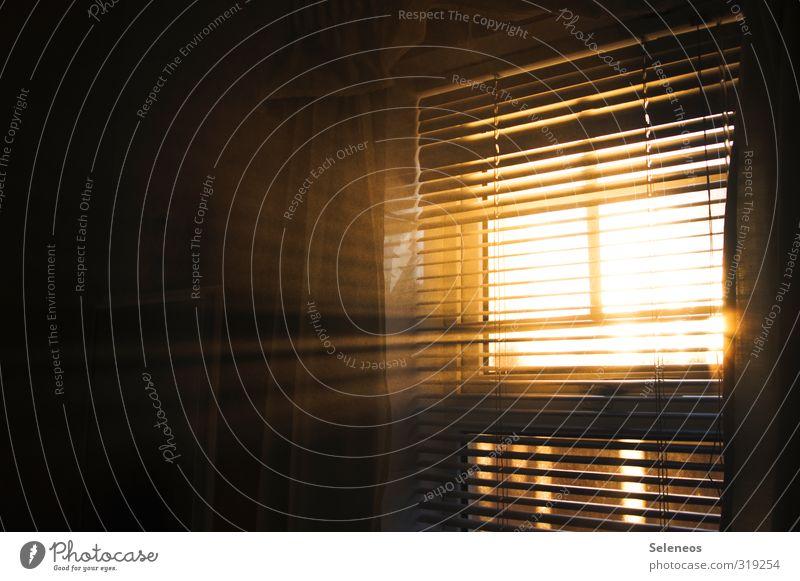 Lass die Sonne rein Häusliches Leben Wohnung Innenarchitektur Raum Schönes Wetter Fenster Linie ruhig Gardine Rollo feucht Dunst Nebel Farbfoto Innenaufnahme