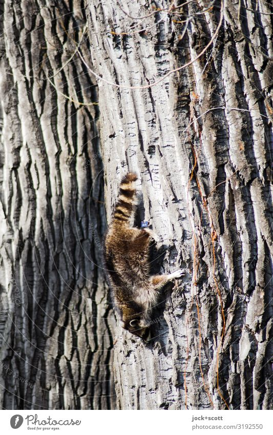 harter Weg nach unten, nicht für den Marder Baumstamm Baumrinde 1 hängen krabbeln authentisch niedlich stark Willensstärke Tatkraft Wege & Pfade Klettern