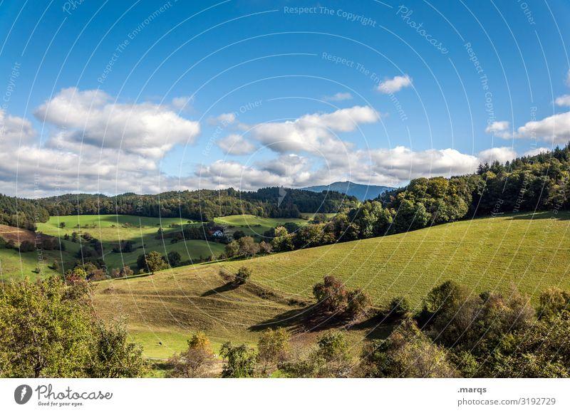 Schwarzwald ländlich Freiheit Stimmung schön natürlich einfach Erholung Hügel Wald Wiese Baum Schönes Wetter Sommer Wolken Himmel Landschaft Natur Ausflug