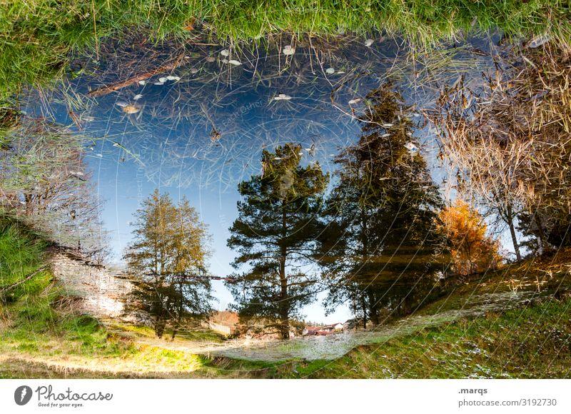 Landunter Umwelt Natur Pflanze Wolkenloser Himmel Sommer Herbst Klimawandel Schönes Wetter Baum Wiese Stimmung Perspektive Überschwemmung Wasser Pfütze Farbfoto