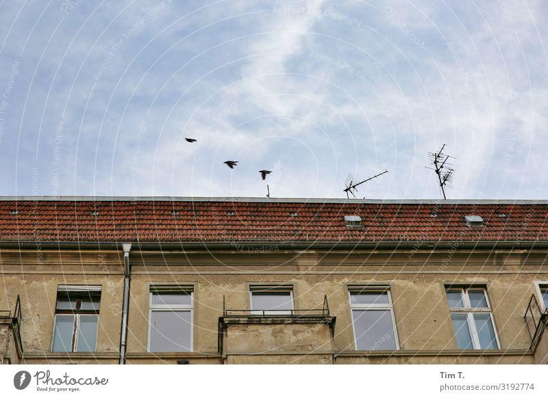 Abflug Berlin Prenzlauer Berg Schönhauser Allee Tier Vogel 3 Stimmung Häusliches Leben Antenne Himmel Dach Farbfoto Außenaufnahme Menschenleer Textfreiraum oben