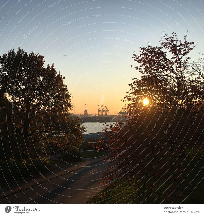 Die drei Kräne in der Ferne. Reederei Natur Landschaft Wolkenloser Himmel Sommer Schönes Wetter Baum Park Flussufer Elbe Hamburger Hafen Hafenstadt