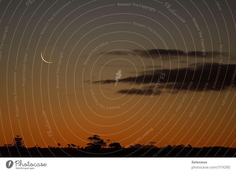 Gute Nacht Kenton Ferien & Urlaub & Reisen Tourismus Ausflug Ferne Freiheit Umwelt Natur Landschaft Himmel Wolken Nachthimmel Mond Baum schlafen dunkel Afrika