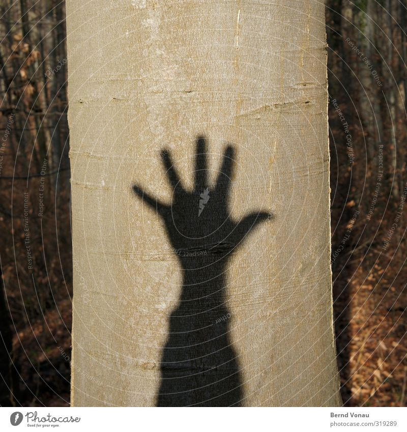 Baumschatten hoch 5 Natur Pflanze Hand Baum Sonne Freude Erholung Wald Umwelt Bewegung Spielen Holz grau Arme wandern Fröhlichkeit