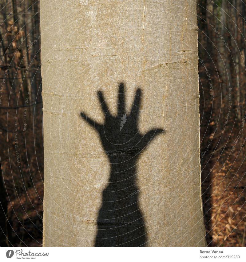 Baumschatten hoch 5 wandern Wald Arme Hand Umwelt Natur Pflanze Sonne Sonnenlicht Baumrinde Baumstamm Holz Zeichen Ziffern & Zahlen Erholung Spielen werfen grau