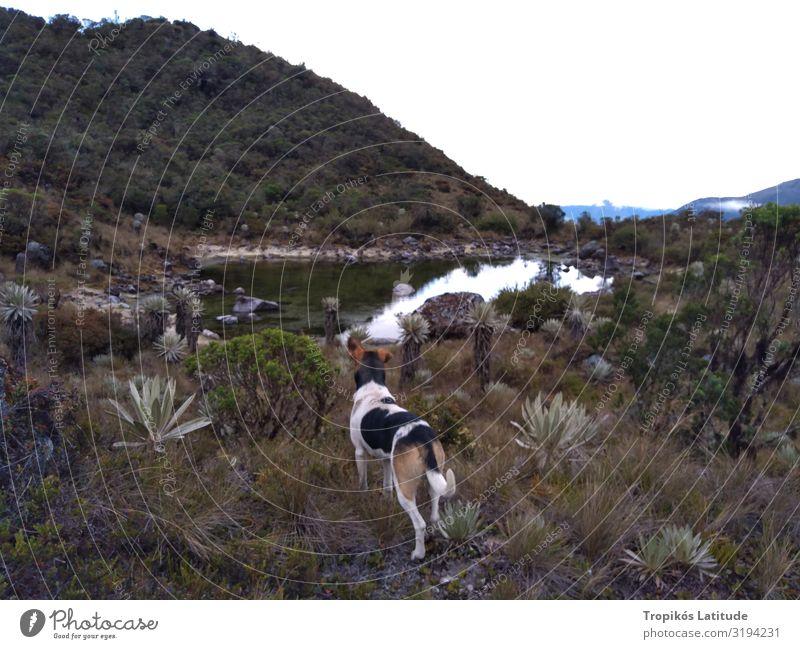 Himmel Ferien & Urlaub & Reisen Natur Hund Pflanze Wasser Landschaft Tier Berge u. Gebirge Leben Umwelt Tourismus See Horizont Abenteuer Wind