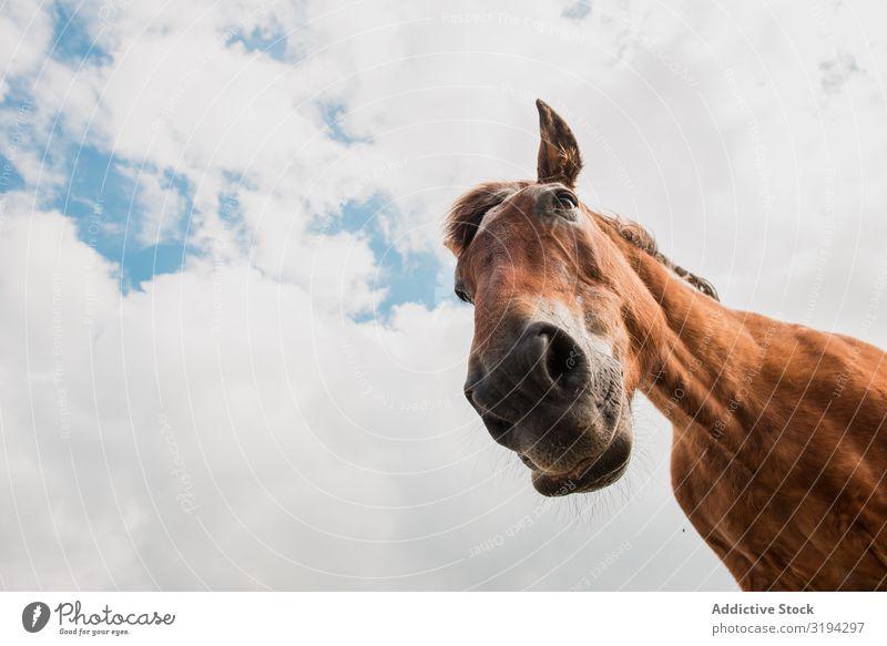 von unten Ansicht des braunen Pferdekopfes vor bewölktem Hintergrund schön Ranch Sonnenlicht Natur Kastanie Weide Fauna Kamm Begleiter Idylle blond Säugetier