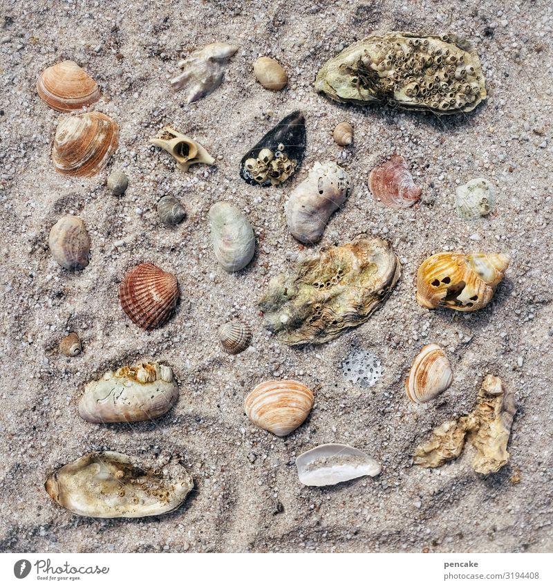 sortiment Schnecke Muschel ästhetisch Zufriedenheit Partnerschaft Erholung Freizeit & Hobby einzigartig Natur Sinnesorgane Freude planen Tourismus