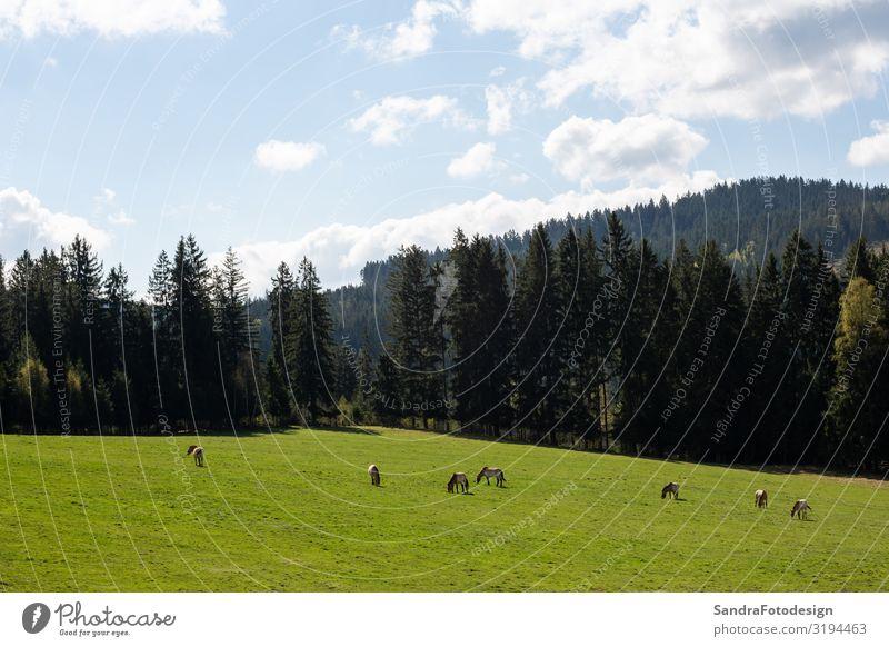 Landscape picture from the national park in Bavaria Ferien & Urlaub & Reisen Sommer Natur Pflanze Wiese Tier Tiergruppe genießen laufen wandern Romantik
