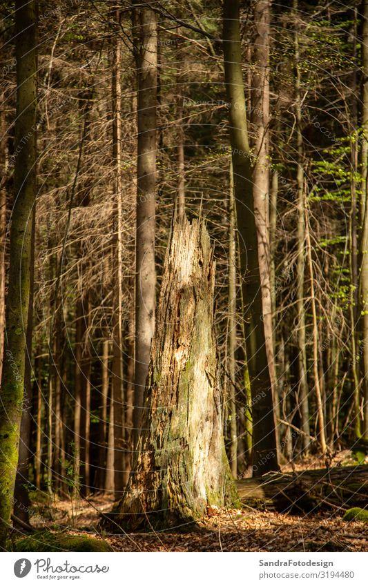 Landscape picture from the national park in Bavaria Ferien & Urlaub & Reisen Sommer wandern Natur Pflanze Baum Park Wald laufen braun ruhig Freizeit & Hobby