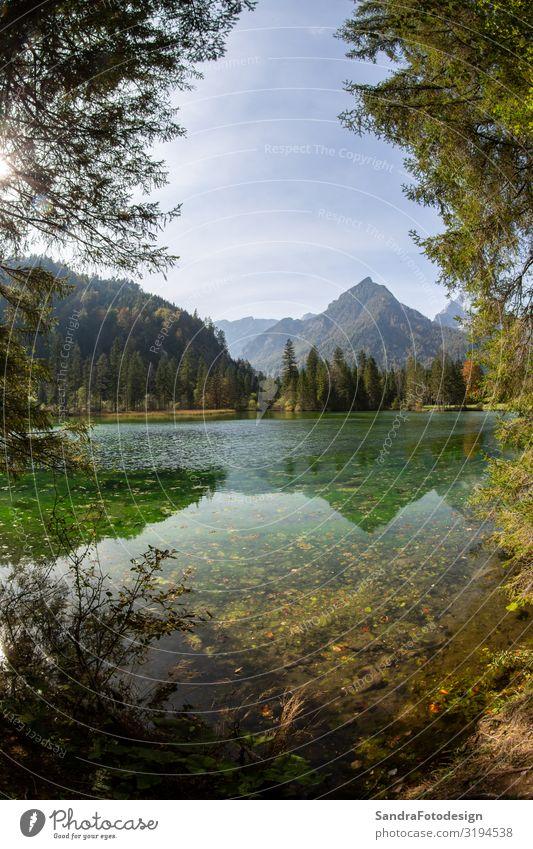 Sommer landscape at the Schiederweiher in austria Ferien & Urlaub & Reisen wandern Natur Landschaft See Lebensfreude alpin alps Österreich austrian