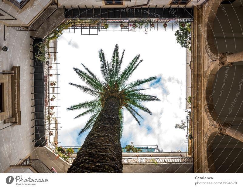 Innenhof Palme Himmel alt Pflanze grün Haus Wolken gelb Wand Senior Mauer braun Fassade grau Wachstum ästhetisch authentisch