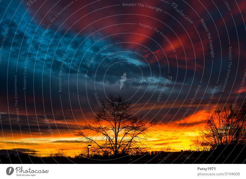 Himmelsbrandung Umwelt Natur Landschaft Wolken Sonnenaufgang Sonnenuntergang Schönes Wetter Baum Wärme blau gelb rot Stimmung Farbe Horizont Klima Perspektive