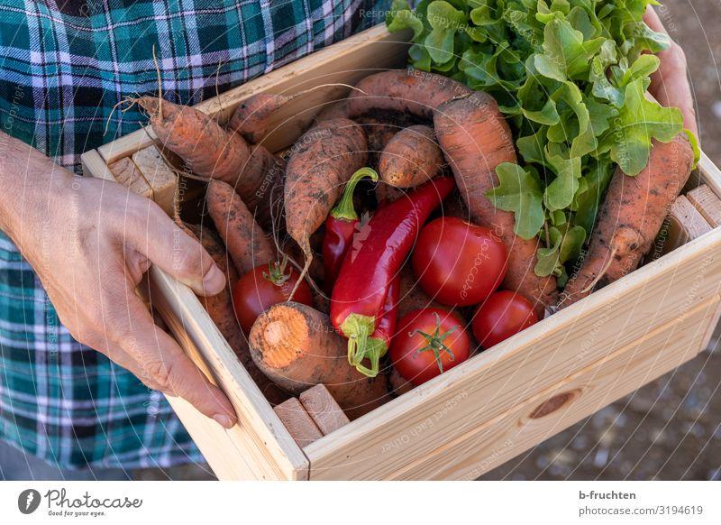 Gemüsekiste, Biokiste Lebensmittel Salat Salatbeilage Ernährung Bioprodukte Vegetarische Ernährung Gesunde Ernährung Wirtschaft Landwirtschaft Forstwirtschaft