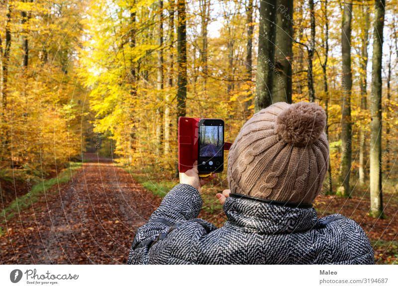 Eine Frau fotografiert einen wunderschönen herbstlichen Wald camera Fotografie Fotokamera Junge Frau Herbst Natur Mensch Technik & Technologie Telefon Glück