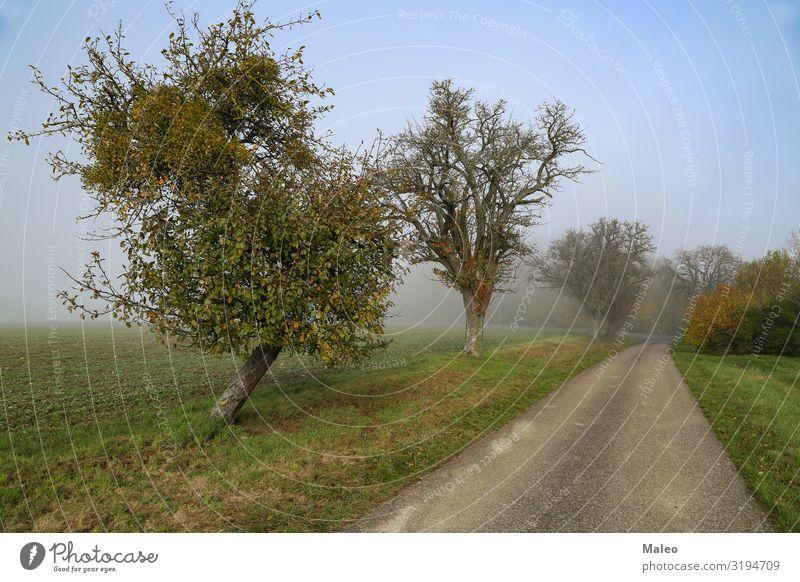 Morgennebel Herbst Straße Wald Landschaft Nebel Natur Licht Sonne Jahreszeiten Baum Wetter Stimmung Herbstlandschaft Fußweg wild Park kalt nass Wege & Pfade